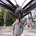 台灣最大的蝴蝶--珠光鳳蝶
