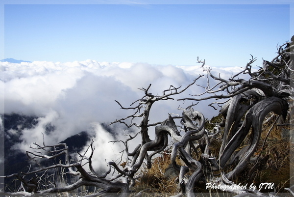 Day 3: 接近雪山主峰的玉山圓柏