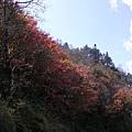 台七甲的楓紅