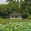 令人感到悠閒的江南庭園