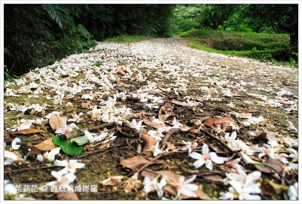 桐花地毯出現了