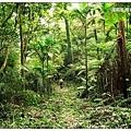 極為原始的森林步道