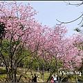 東勢林場賞櫻-05.jpg