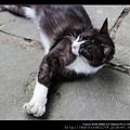 nEO_IMG_IMG_8313.jpg