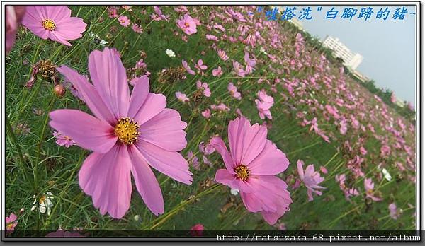 nEO_IMG_DSCF3491.jpg
