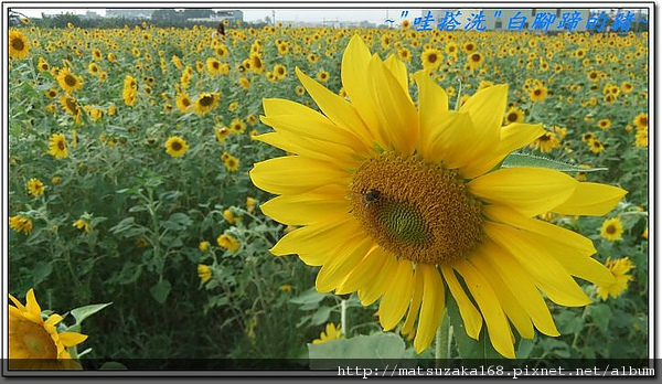 nEO_IMG_DSCF3477.jpg