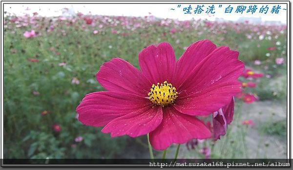 nEO_IMG_DSCF3512.jpg