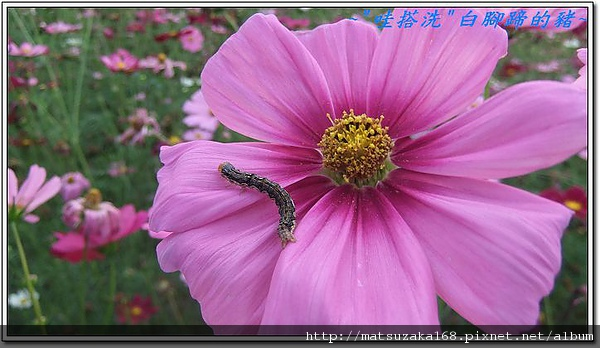 nEO_IMG_DSCF3515.jpg