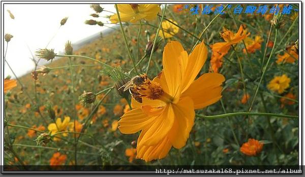 nEO_IMG_DSCF3531.jpg