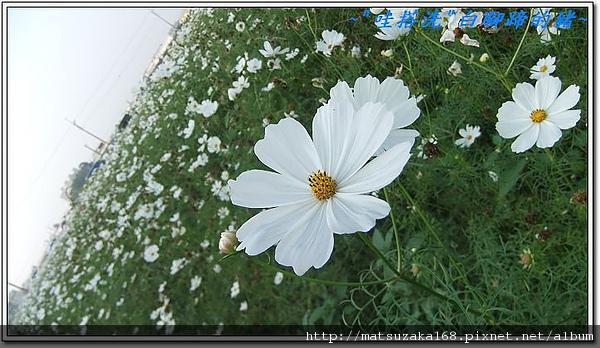 nEO_IMG_DSCF3503.jpg