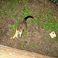 Possum吃吐司