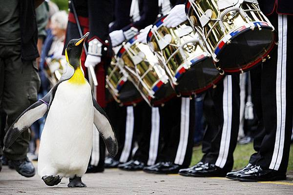 Sir Penguin03