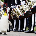 Sir Penguin03
