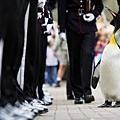 Sir Penguin04