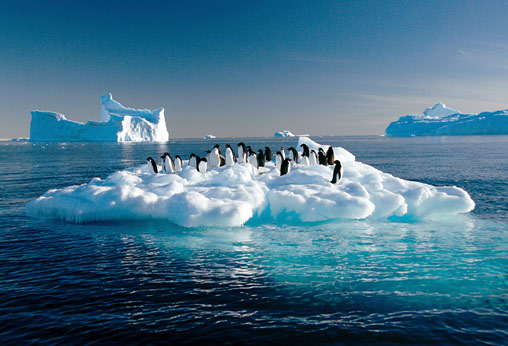 Penguins on a moving iecberg