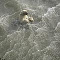 Polar Bear03.jpg