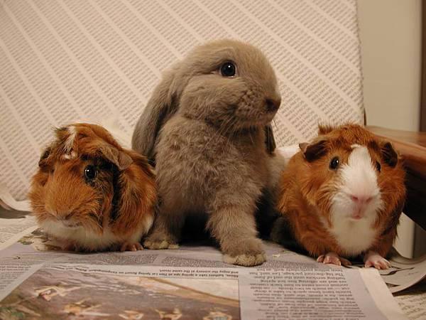 Mollie & Moggie & Migo