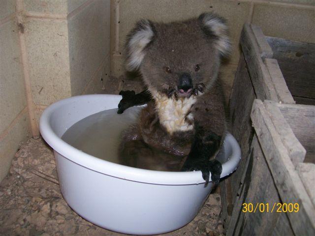 koala03.jpg