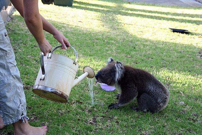 Koala05.bmp