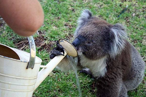Koala07.bmp