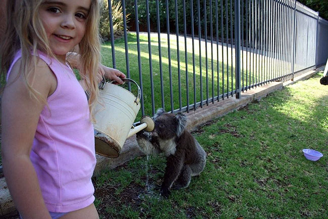 Koala08.bmp