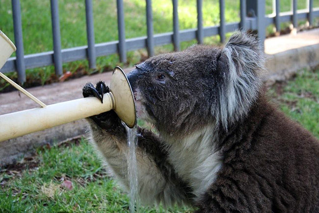 Koala09.bmp