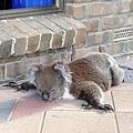 Koala15.bmp