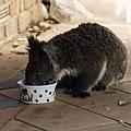 Koala28.bmp