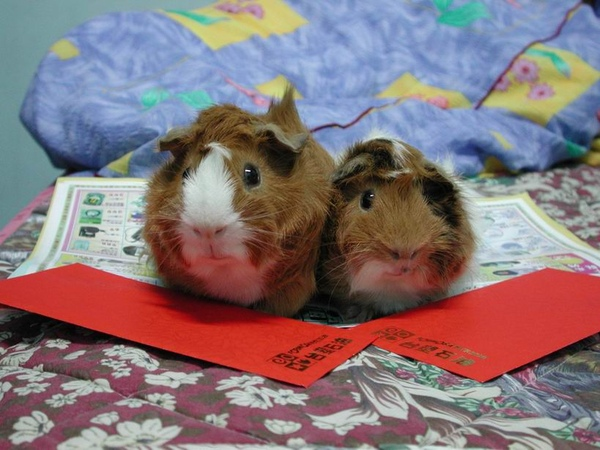 Mollie & Moggie