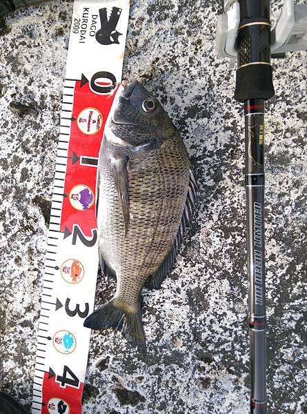 20150618魚3
