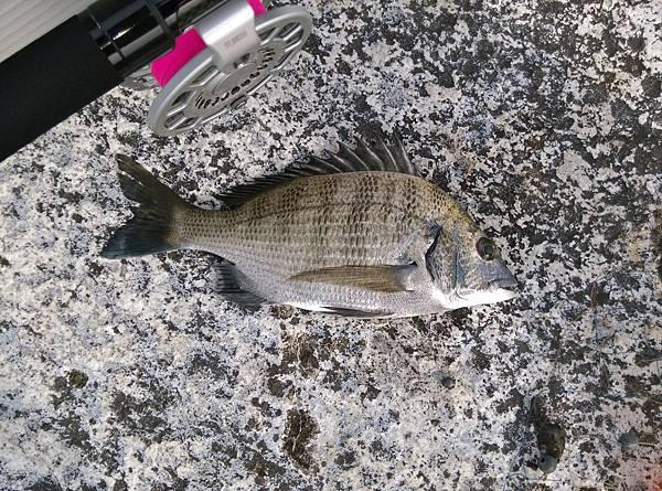 20150618魚2