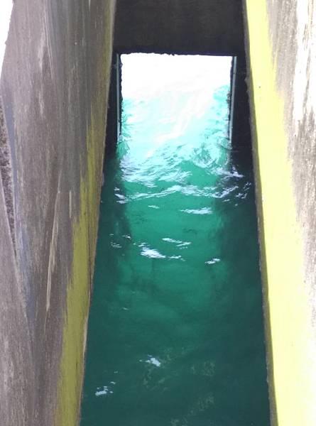 涵洞魚影1