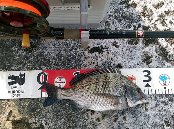 20150622魚2