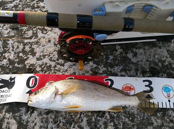 20150622魚1
