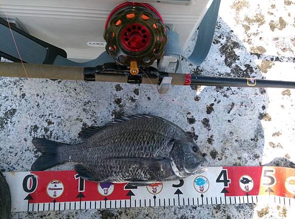 20150622魚3