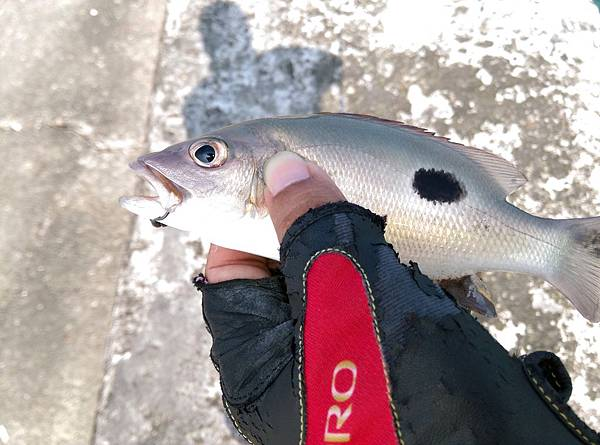 20150622魚7
