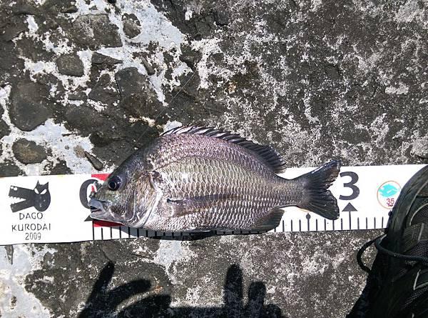 20150623魚6