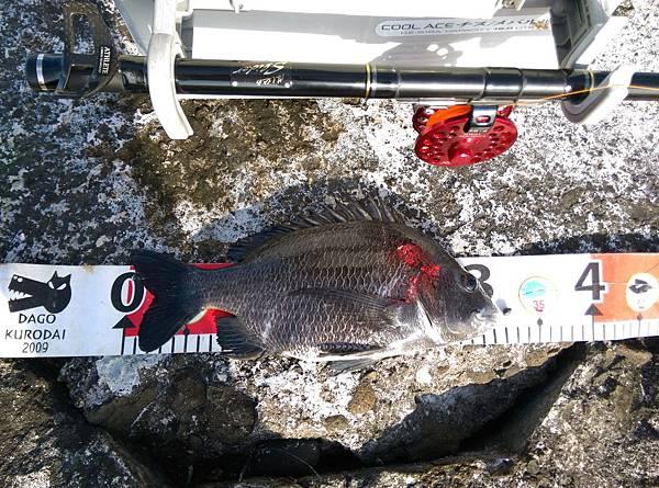 20150623魚1