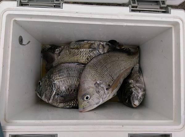 20150623魚8