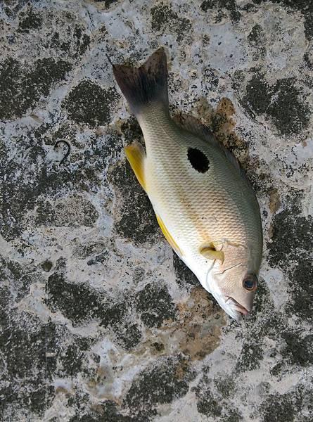 20150629魚2.jpg