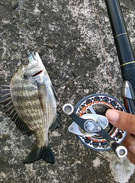 20150629魚3.jpg