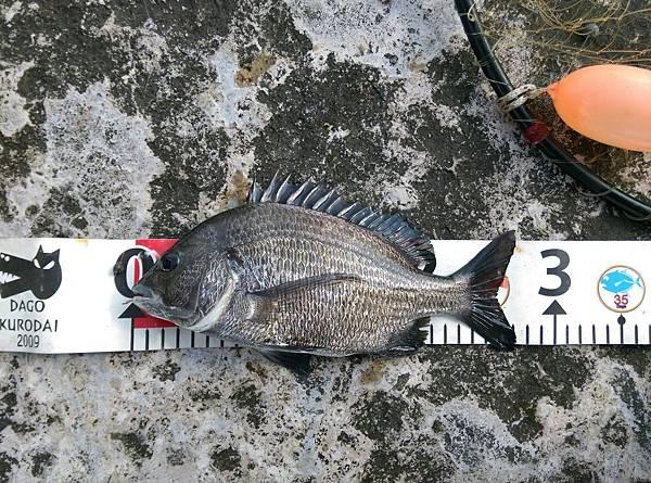 20150629魚7.jpg