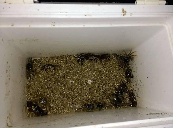 20150721螃蟹餌.jpg
