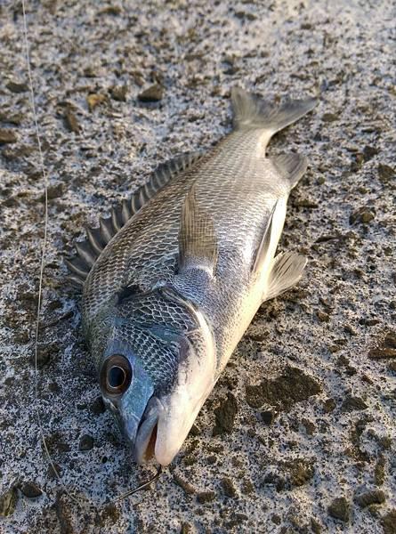 10150727魚1.jpg