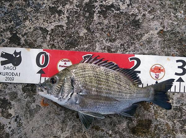 20150727魚3.jpg