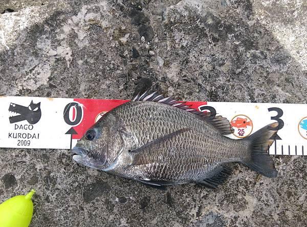 20150727魚5.jpg