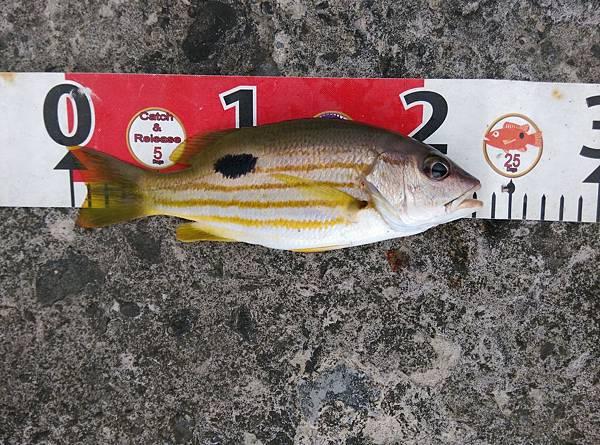 20150727魚6.jpg