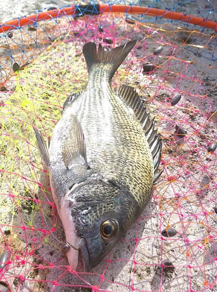 20150728魚2.jpg