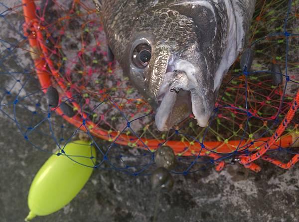 20150810魚1.jpg