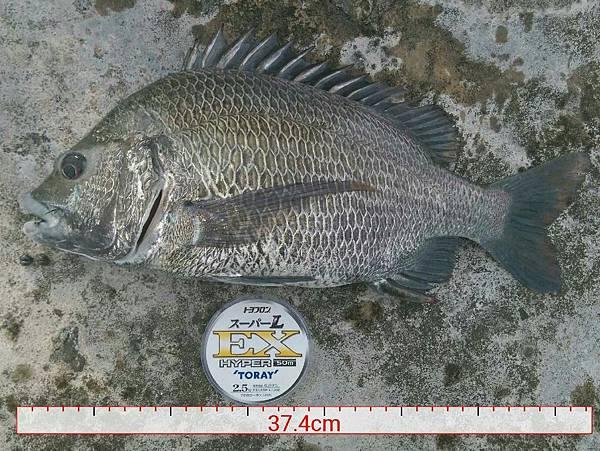 20150810魚.jpg